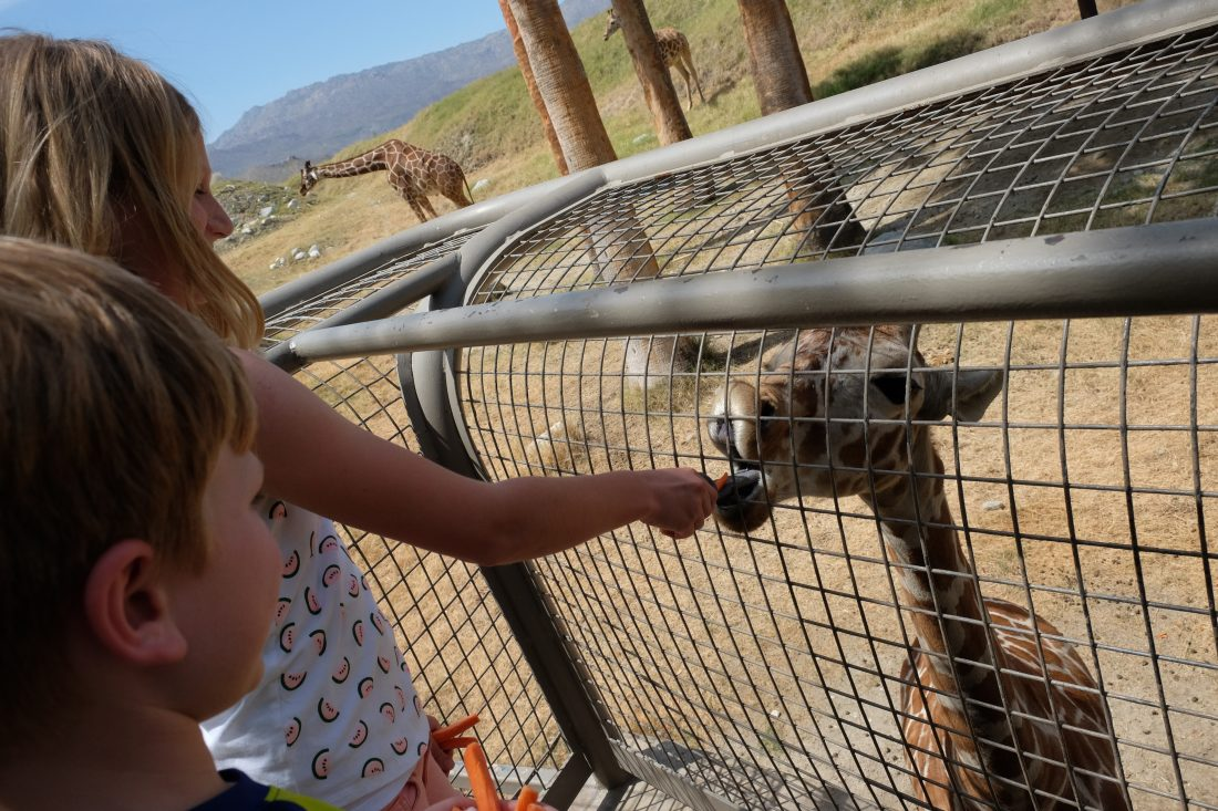 Feeding a baby giraffe at the Living Desert. Palm Springs
