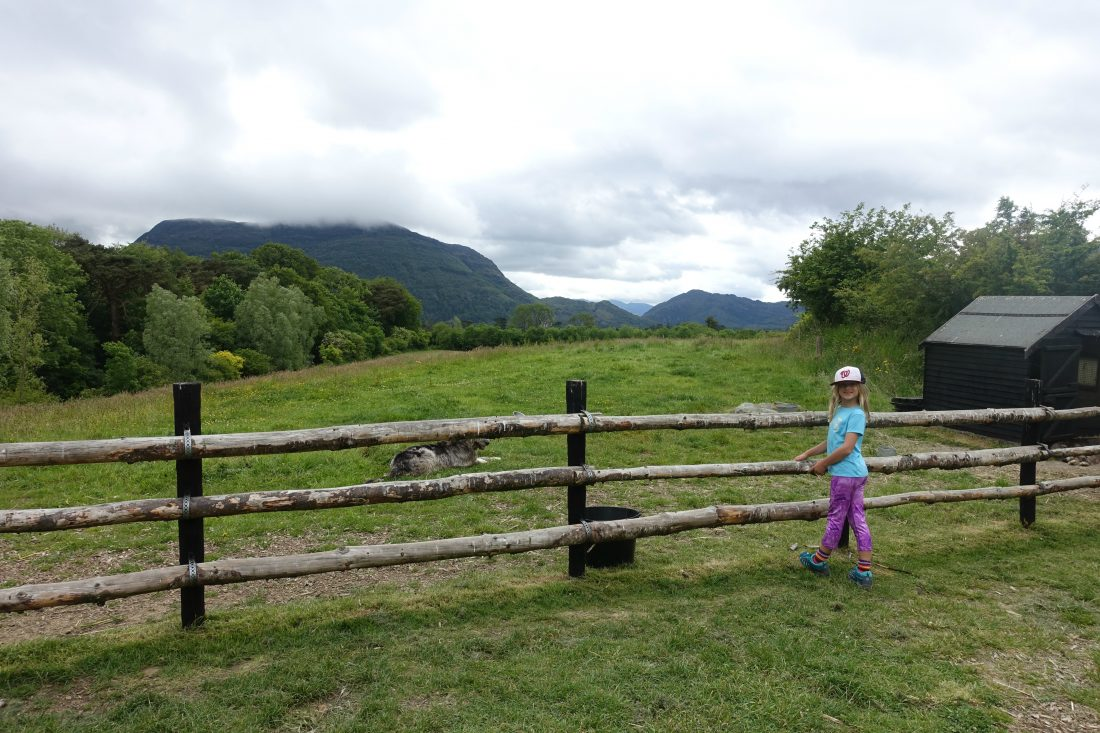 Admiring the views (and the dog) at the large Muckross Farm.