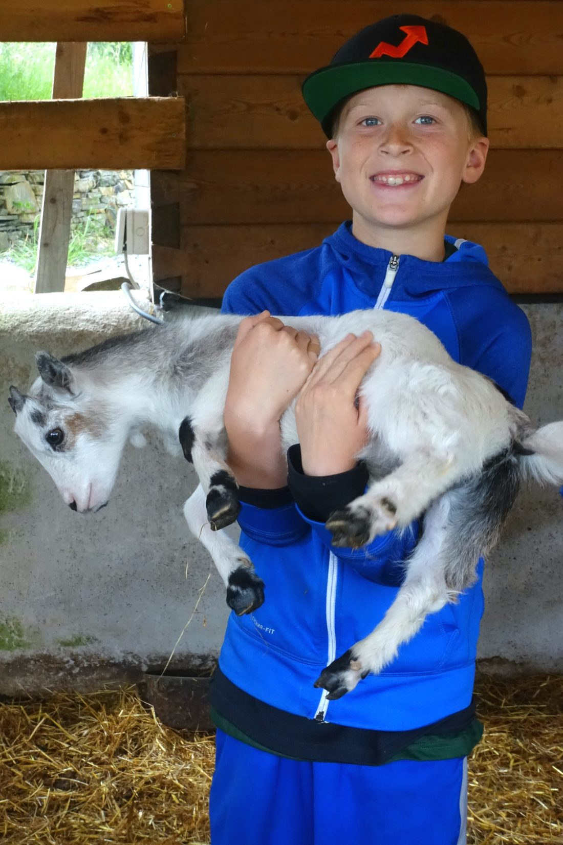 Baby goats at Blueberry Hill Farm