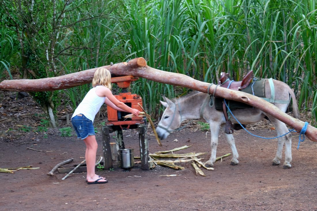 Trying to sneak a sugar treat to the donkey