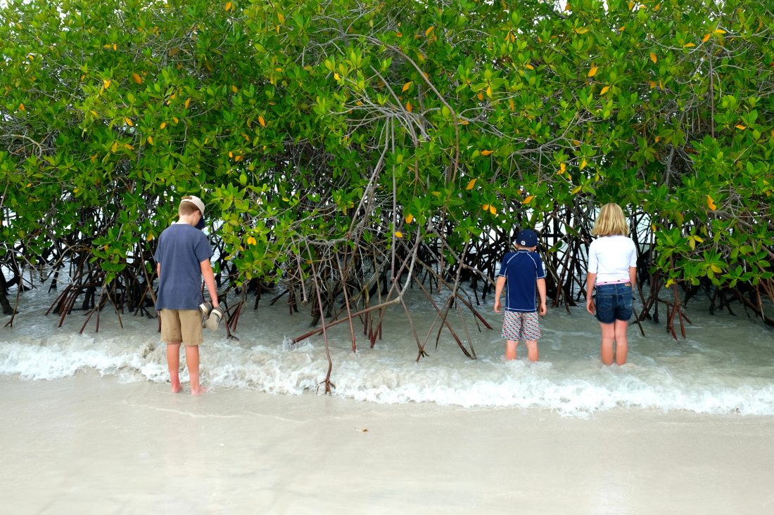 Enjoying the surf in the mangroves