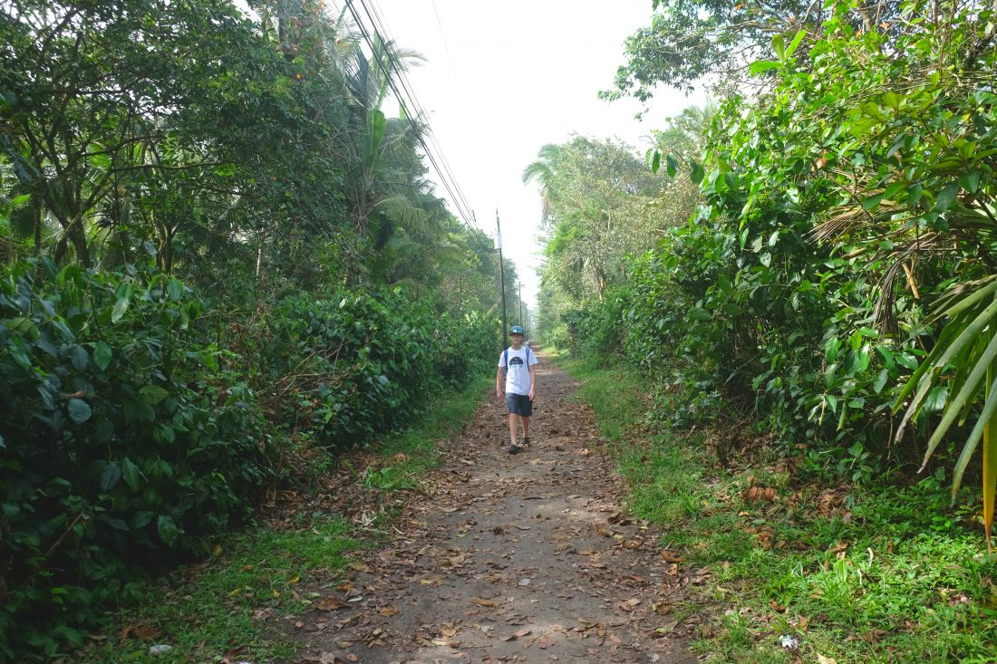Walking down the long path that parallels the beach. Tortuguero Costa Rica