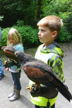 Attentively listening to all the instructions. Hawk walk at Ashford Castle, County Mayo, Ireland