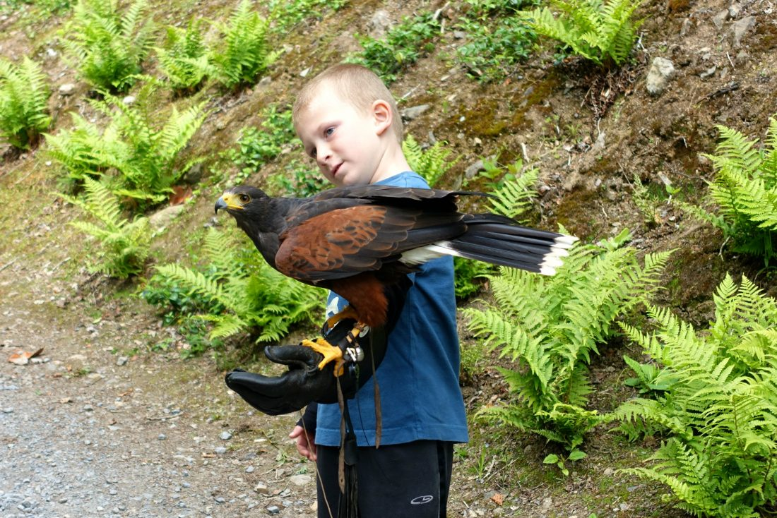 It's pretty impressive to have a hawk on your arm. Ashford Castle. County Mayo, Ireland