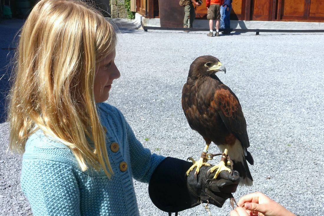 Impressed with the hawk on her arm! Ireland School of Falconry at Ashford Castle, County May, Ireland