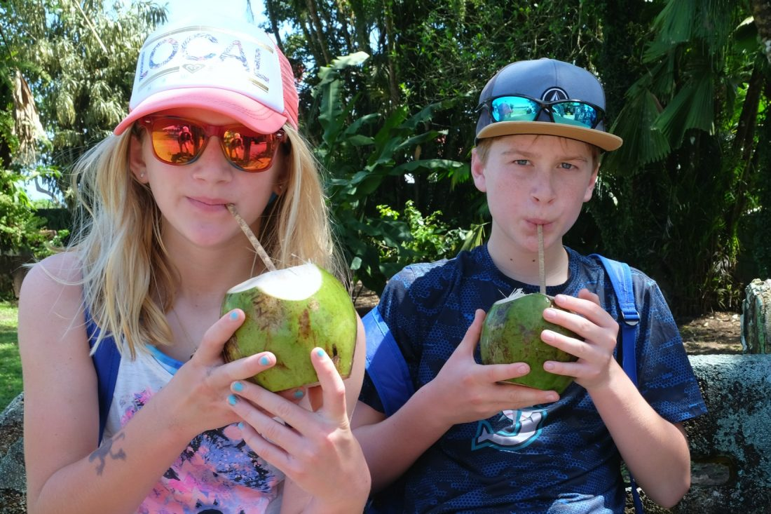 Drinking coconut water - right from the source. Tortuguero. Costa Rica