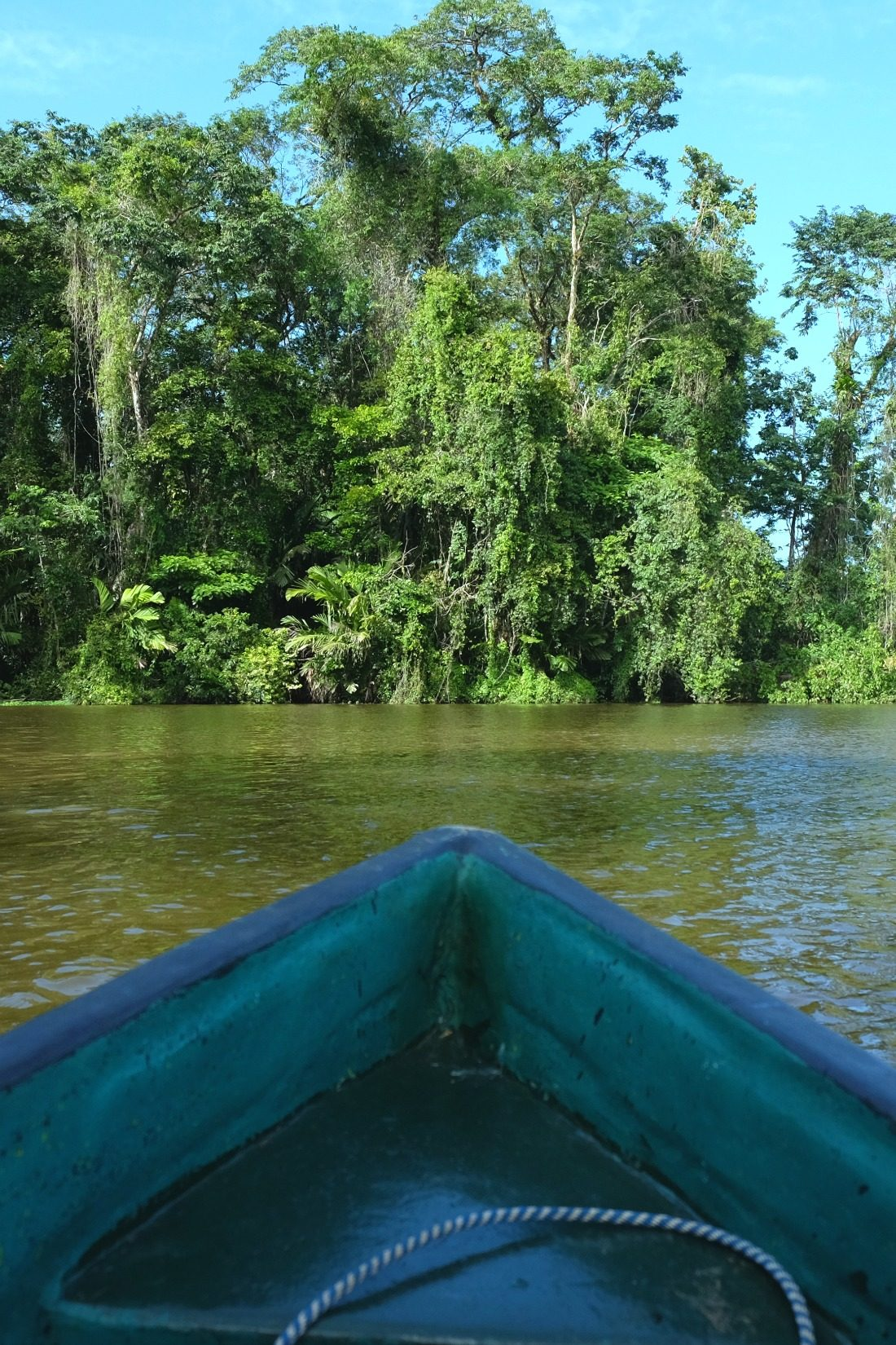 Jungle expedition by canoe. Tortuguero National Park. Costa Rica