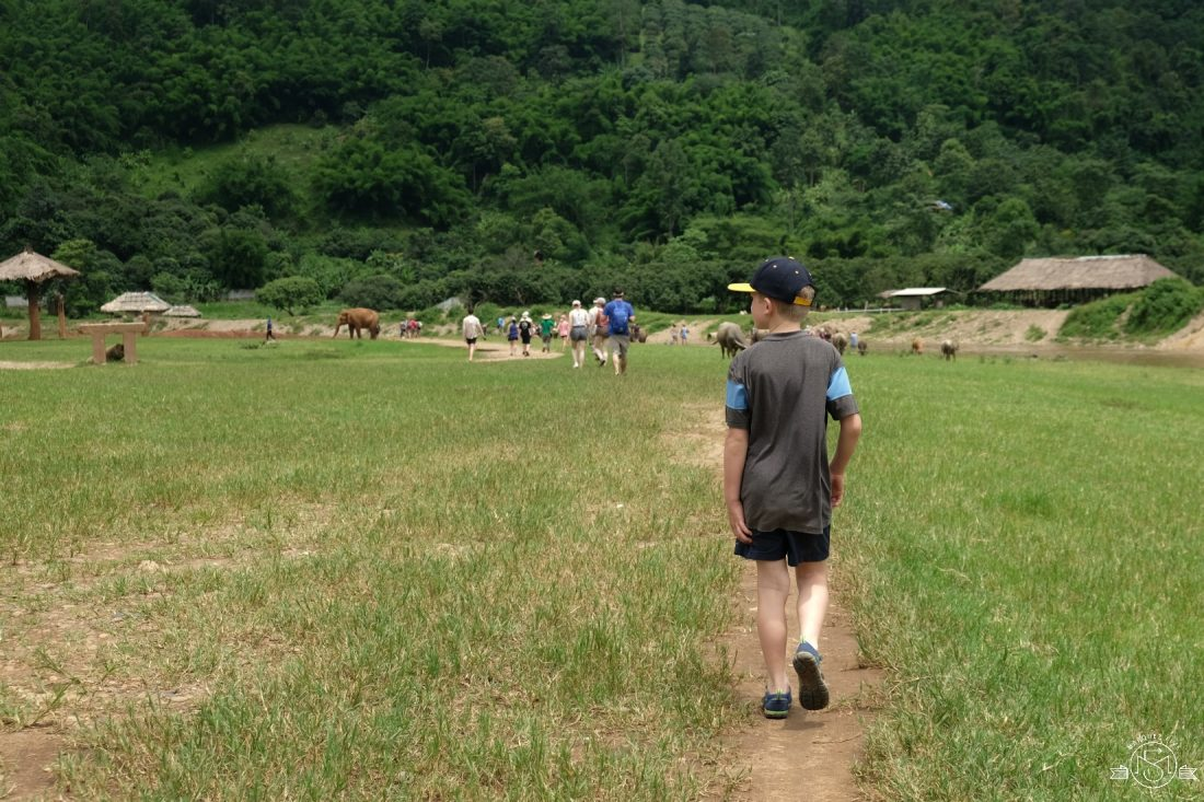 Walking around the grounds while the elephants roam free