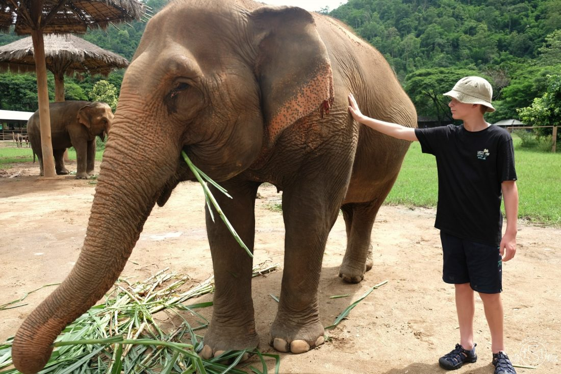 Most of the elephants were so gentle and let us pet them.