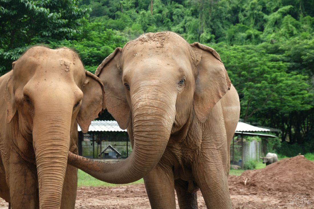 These two elephants were BFFs