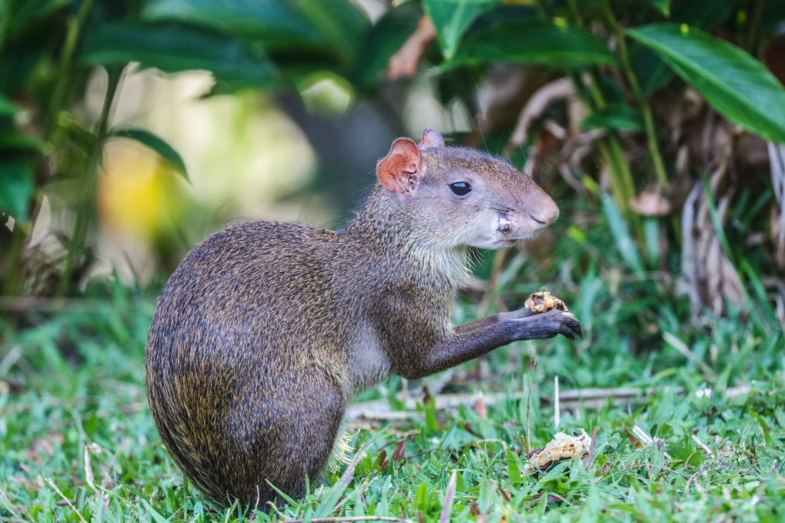 Animals of the Panama Canal Rainforest