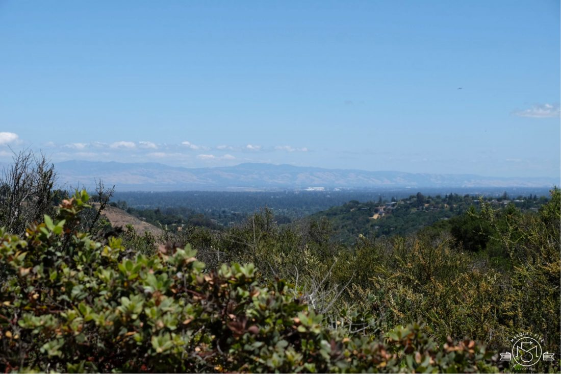 Looking towards the East Bay from the top of the Polly Geraci trail. Pulgas Ridge Open Space