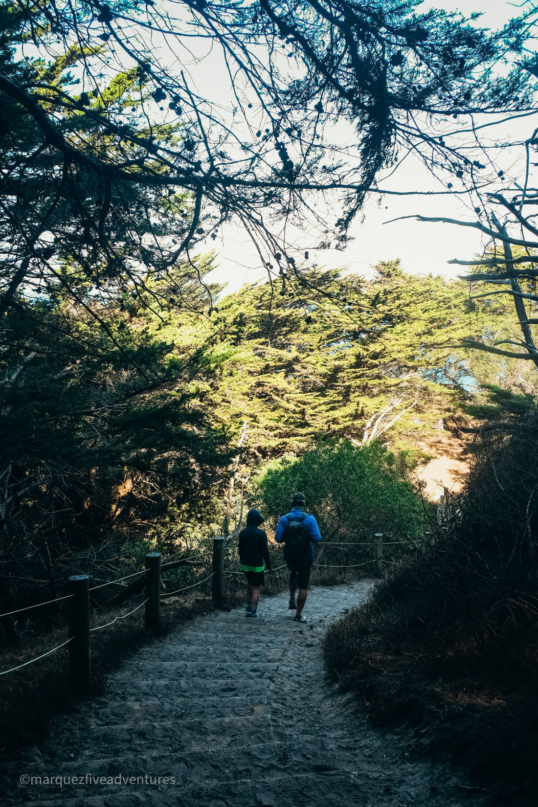 Offshoot trail to Mile Rock Beach. Land's End Trail San Francisco California