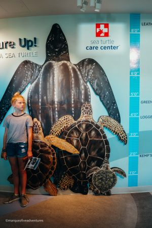 Measuring up to a sea turtle at the South Carolina Aquarium in Charleston