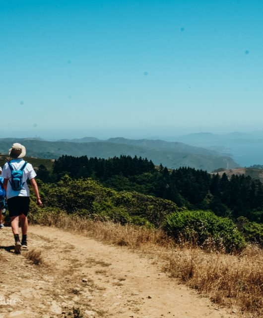 Looking south towards San Francisco from the Dipsea Trail on Mt. Tam. Mill Valley, Marin County California