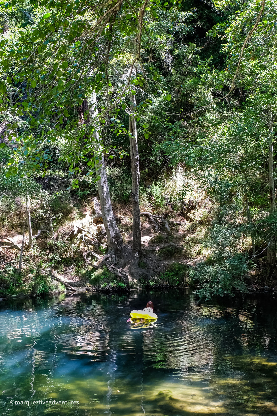 Swimming over to the rope swing at Big Rock Hole in Henry Cowell Redwoods State Park. Santa Cruz, California