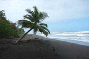 Playa Tortuguero along the Caribbean Sea. Tortuguero Costa Rica