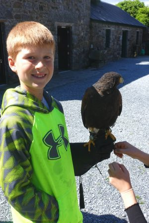Meeting his hawk. Ireland's School of Falconry at Ashford Castle, County Mayo, Ireland