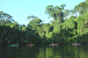 Kayakers on a jungle expedition in the canals. Tortuguero. Costa Rica