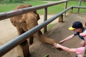 Feeding the elephants at Elephant Nature Park