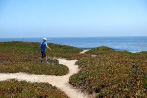 Exploring all the paths. West Cliff Drive trail. Santa Cruz California