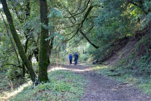 Hiking on Meadow Trail in Coal Creek Preserve. San Mateo County