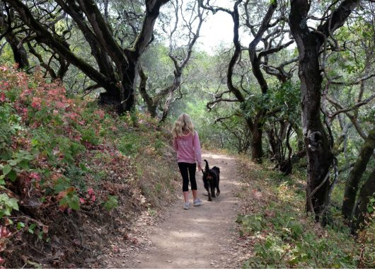 Waterdog Loop Trail goes all the way around the lake. Belmont California