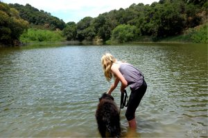 Trying to get our dog into Waterdog Lake. Belmont California