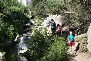The trail turned surprisingly lush! Tahquitz Falls Hike; Palm Springs, California