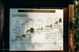 Evolution of the Pygmy Forest. Van Damme State Park. Mendocino California