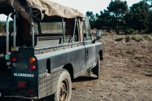 Our Land Rover, Blueberry. B Bryan Preserve. Point Arena California. Mendocino County