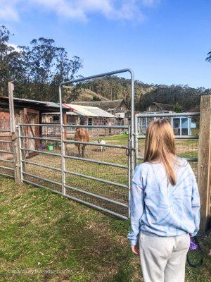 To access the trail we had to walk through an equestrian center with llamas & goats. Rancho Corral de Tierra. Moss Beach, California